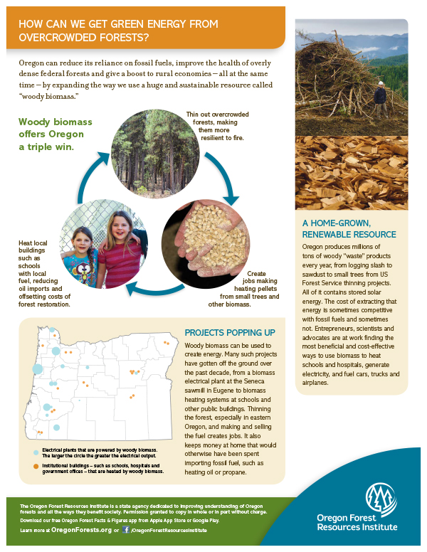 Forest Fact Sheet-Woody Biomass