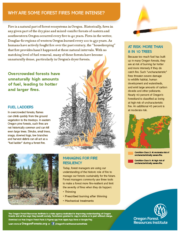 Forest Fact Sheet-Fire