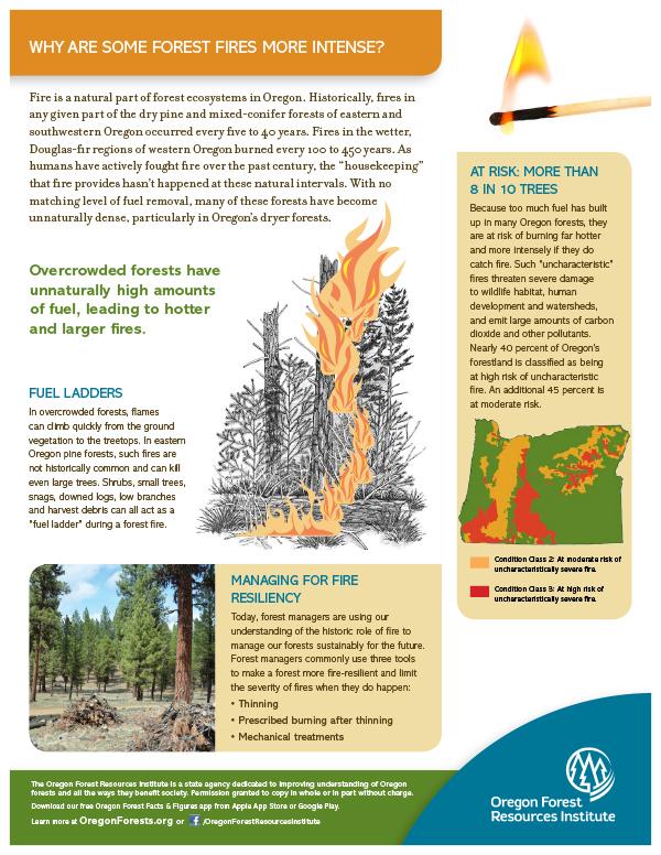 Forest Fact Sheet-Fire