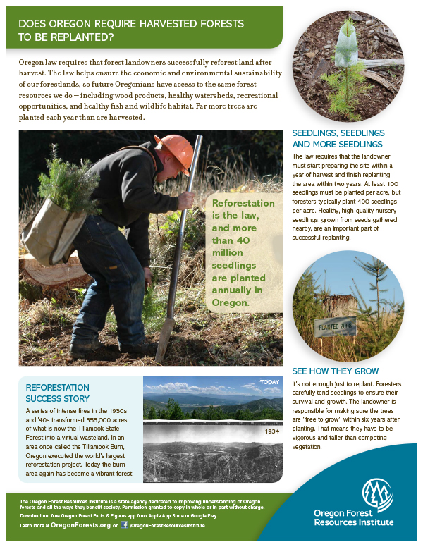 Forest Fact Sheet-Reforestation
