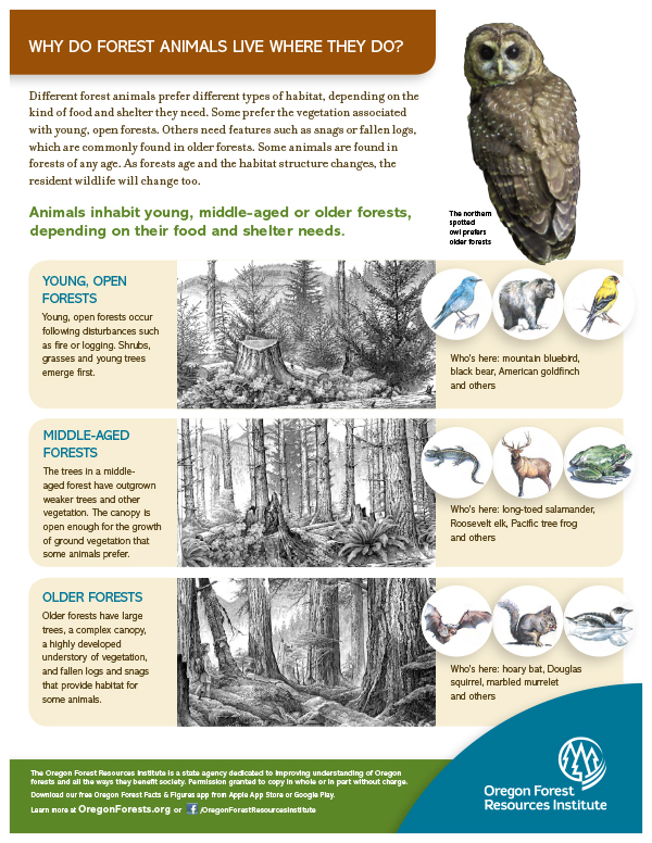 Forest Fact Sheet-Wildlife